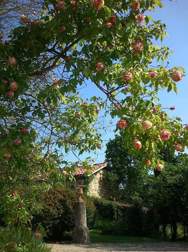 Making a garden in Gascony