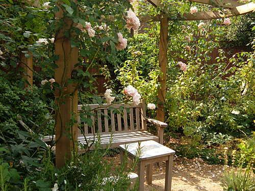 rose pergola
